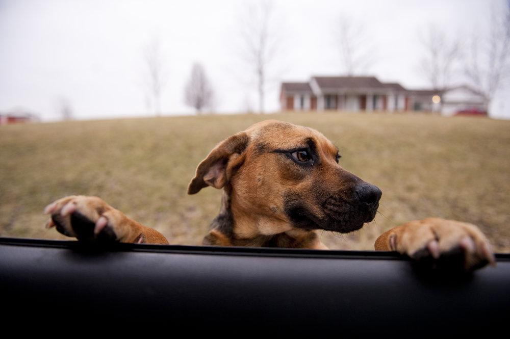 spay dog