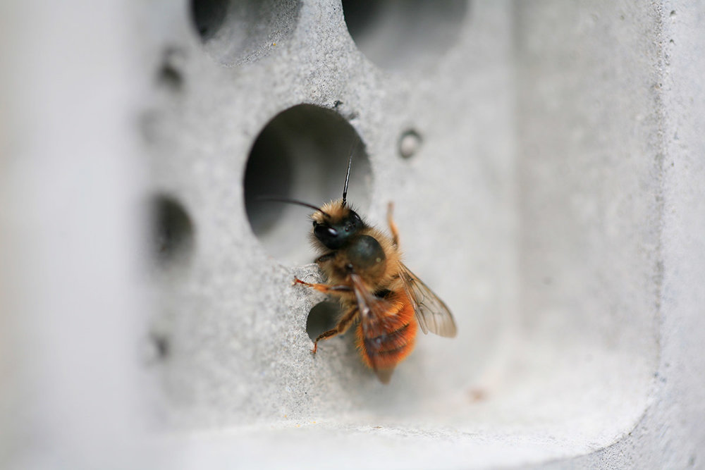Buy or build a bee house   Cavity nesting bees, such as red mason bees and leafcutter bees, require dry hollow tubes to lay their young. You can either buy a bee house, such as Green&Blue's award-winning  Bee Brick  or make your very own out of recycled materials. We recommend using  this guide  from the brilliant team at Buglife.