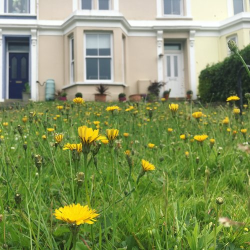 Bar+Terrace,+Falmouth+-+Dandelions.jpeg