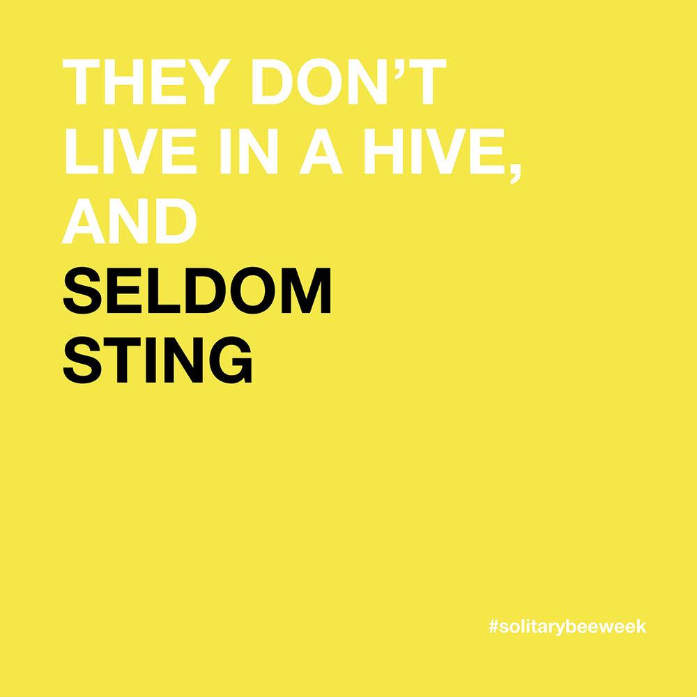 solitary-bee-week-3