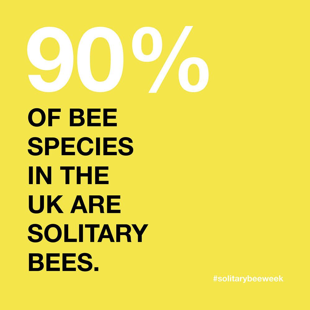 solitary-bee-week-7