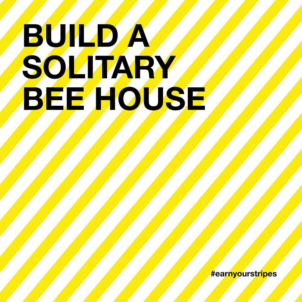 solitary-bee-week-8