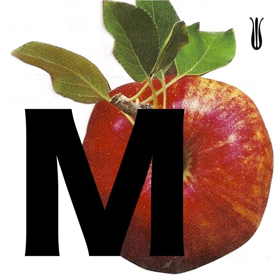 monoappleM.jpg