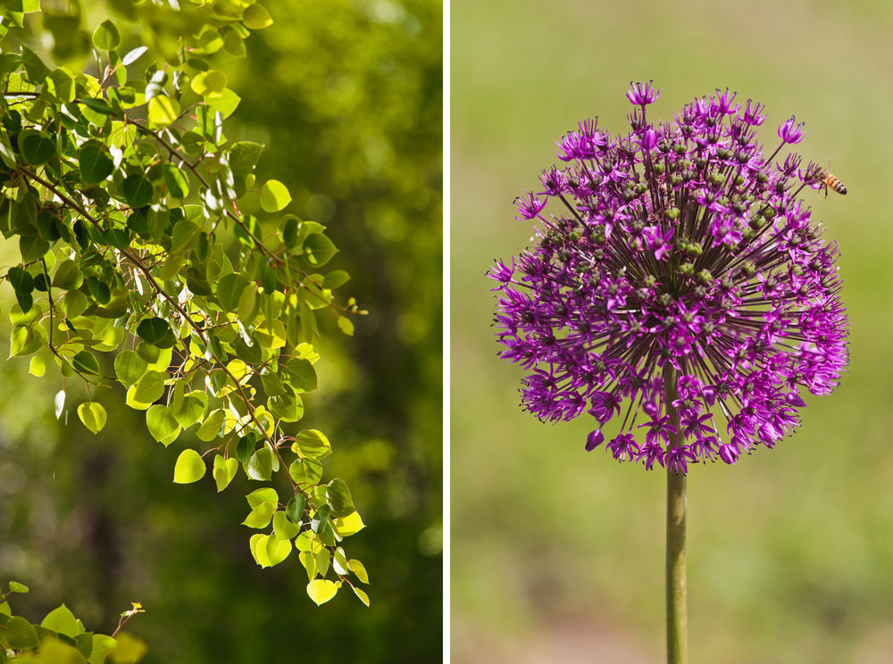denver-botanic-gardens-chatfield-farms-wedding-tomKphoto-053.jpg