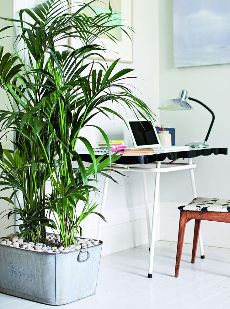 Isabelle-Palmer-The-House-Gardener-Gardenista-03.jpg