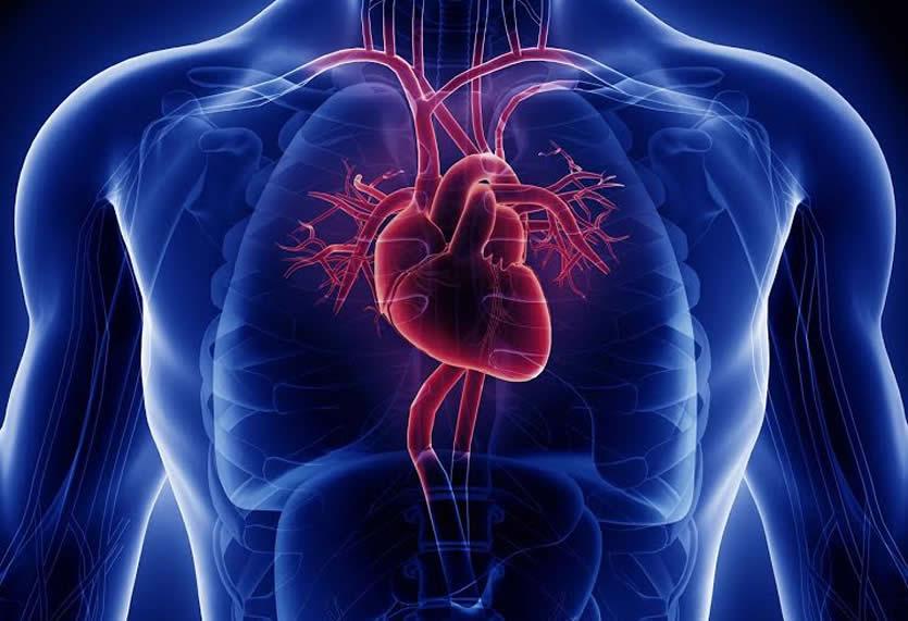 Cardiovascular -
