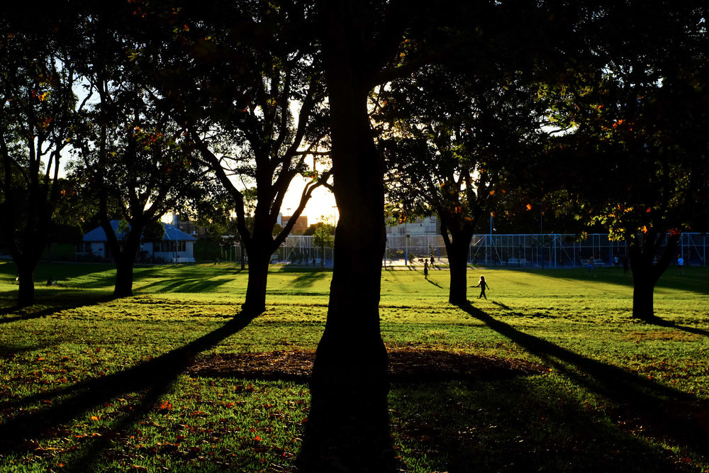 Sydney Cleveland St Park.jpg