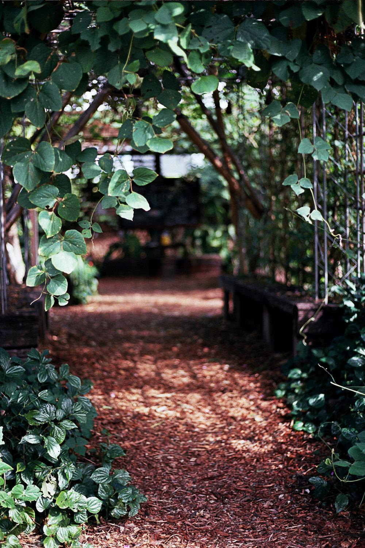 v2 _10_0246 street garden outside magpie.jpg