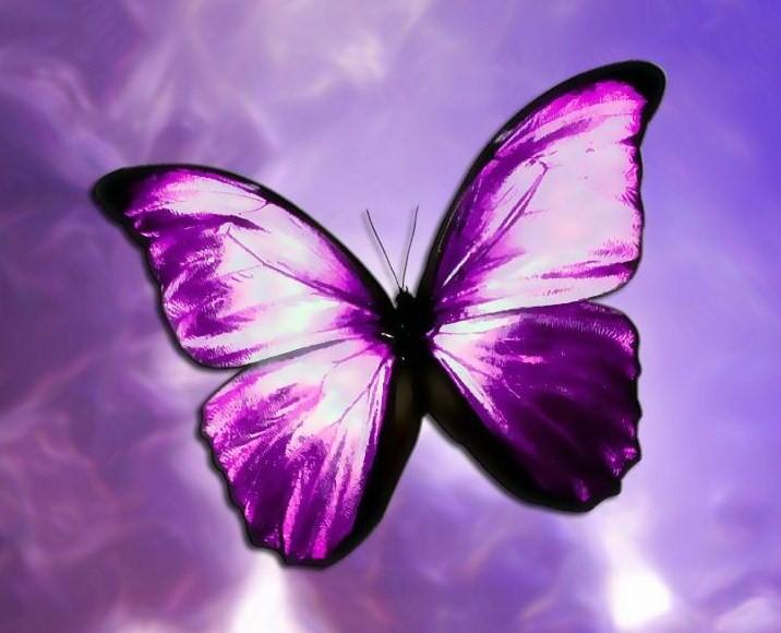 purple-butterfly.jpg