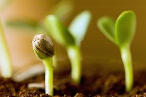 Socios Karmicos - Con la ayuda de amigos y expertos, profundiza en tu práctica y aplica las enseñanzas a tu rutina diaria. Planta las mejores semillas y aprovecha la oportunidad de vincularte con las personas adecuadas para compartir tu experiencia.