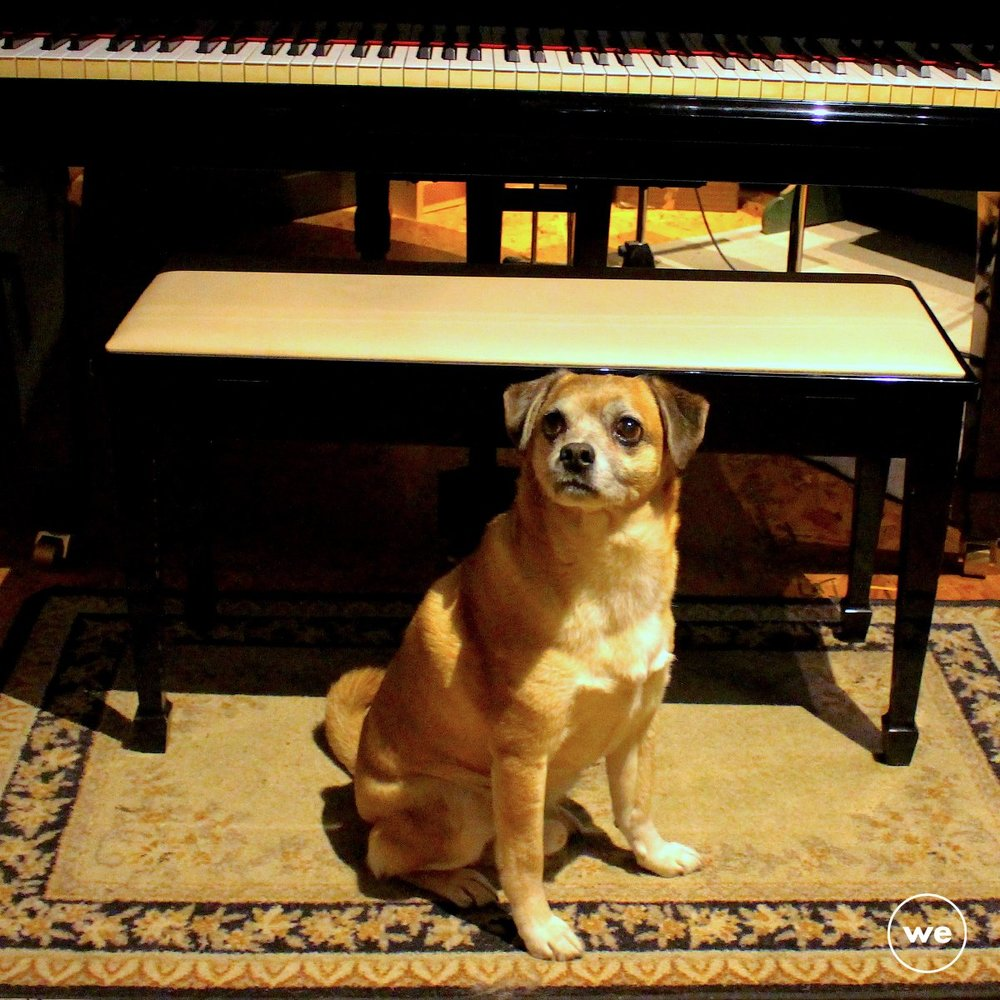 Hector Studio Dog.jpg