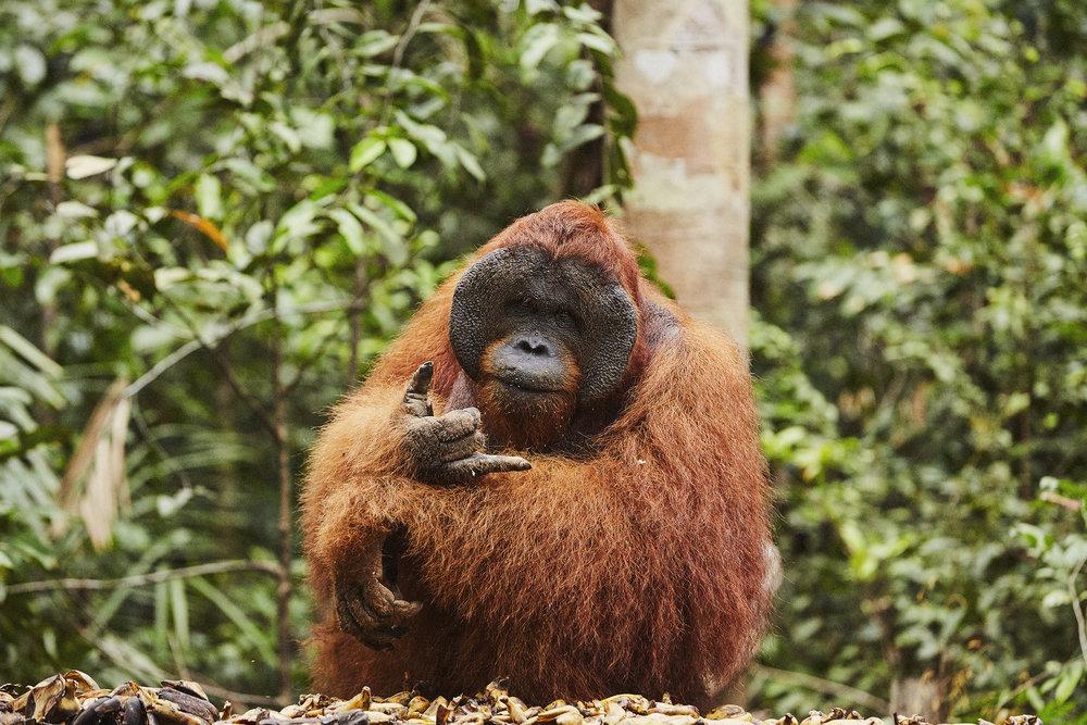 Borneo_Scott Mac Donough_3329.jpg