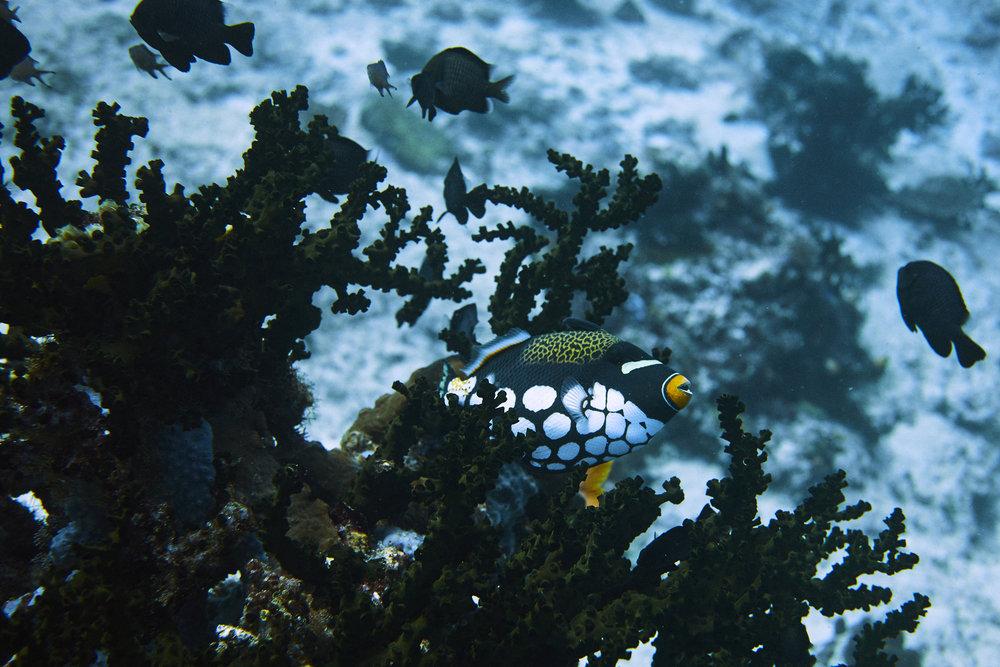 Raj Ampat_West Papua_Scott Mac Donough_0267.jpg