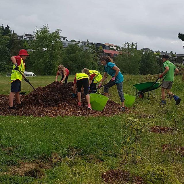 Many hands make work easy. #kgt #greeningtaupo