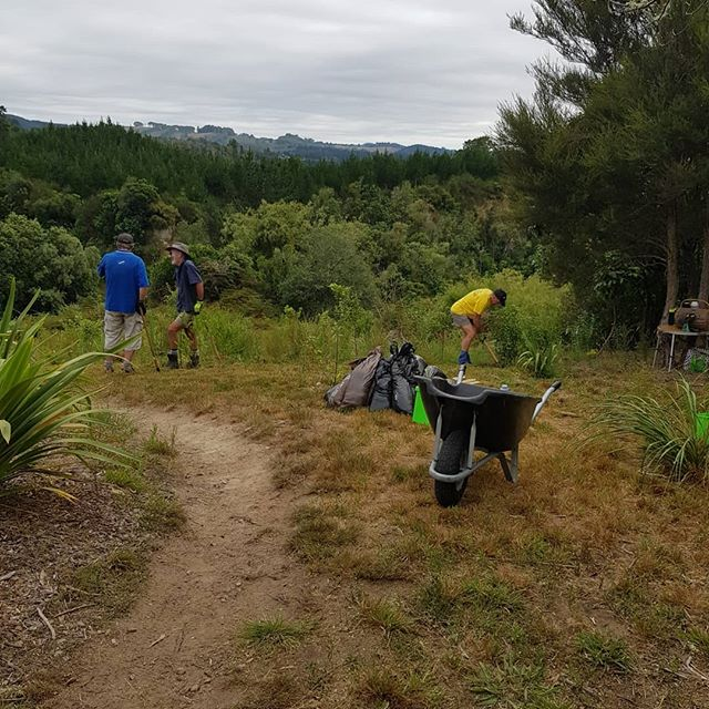 Great morning out with the Wicked Weeders. Plants looking beautiful at the rest area #greeningtaupo