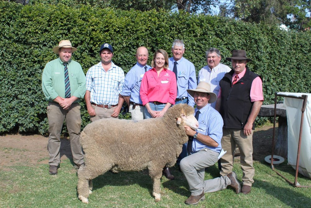 Pictured here:  Brad Wilson, Alistair Wilson, George Falkiner, Eleanor Falkiner, Andy McLeod, Andy Maclean, Dougie Wilson and Scott Thrift with top-selling Poll Lot 1 Ram purchased by Alistair and Dougie Wilson for $6000.
