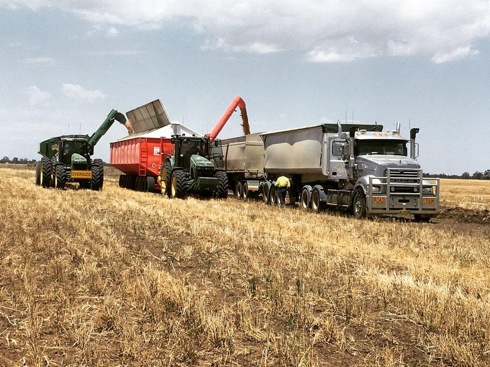 Wheat harvest, 2017