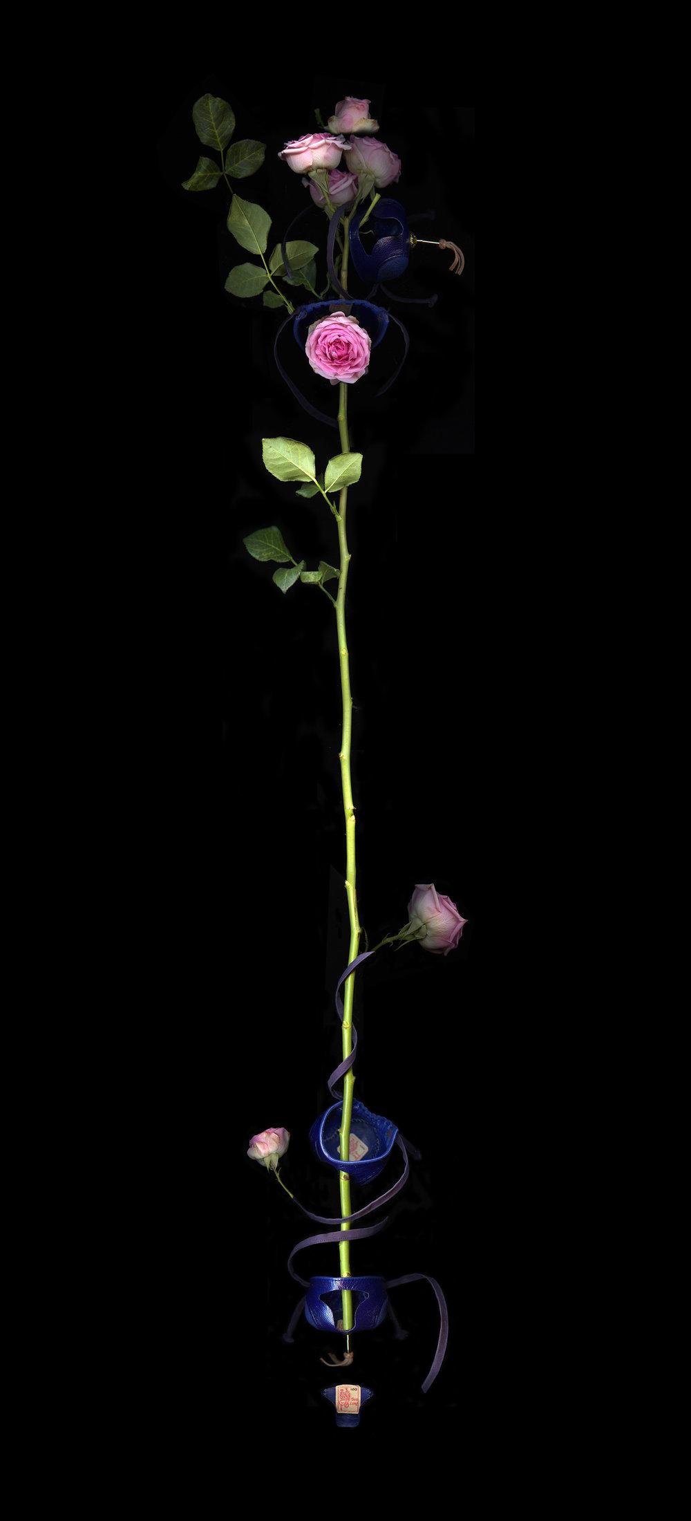maitha-growth.jpg