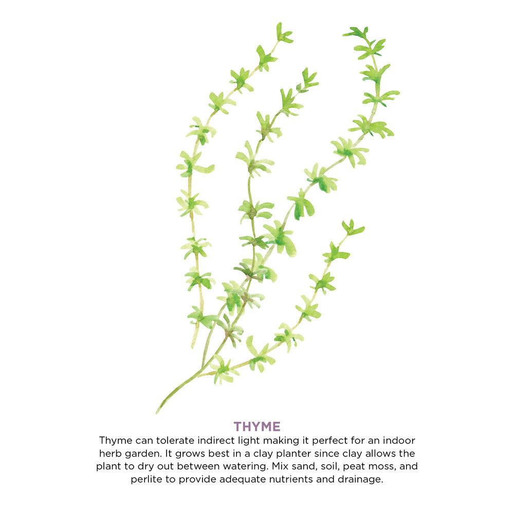 herbs5.jpg