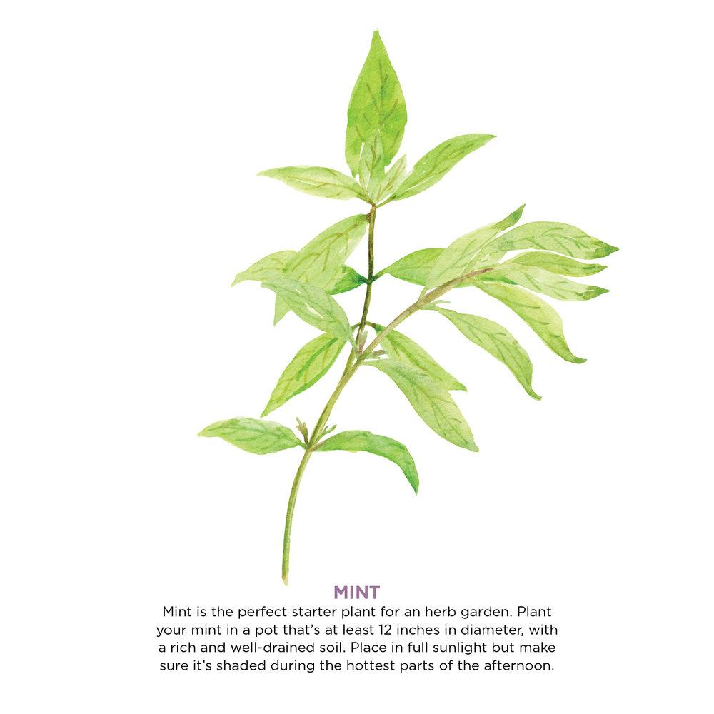 herbs7.jpg
