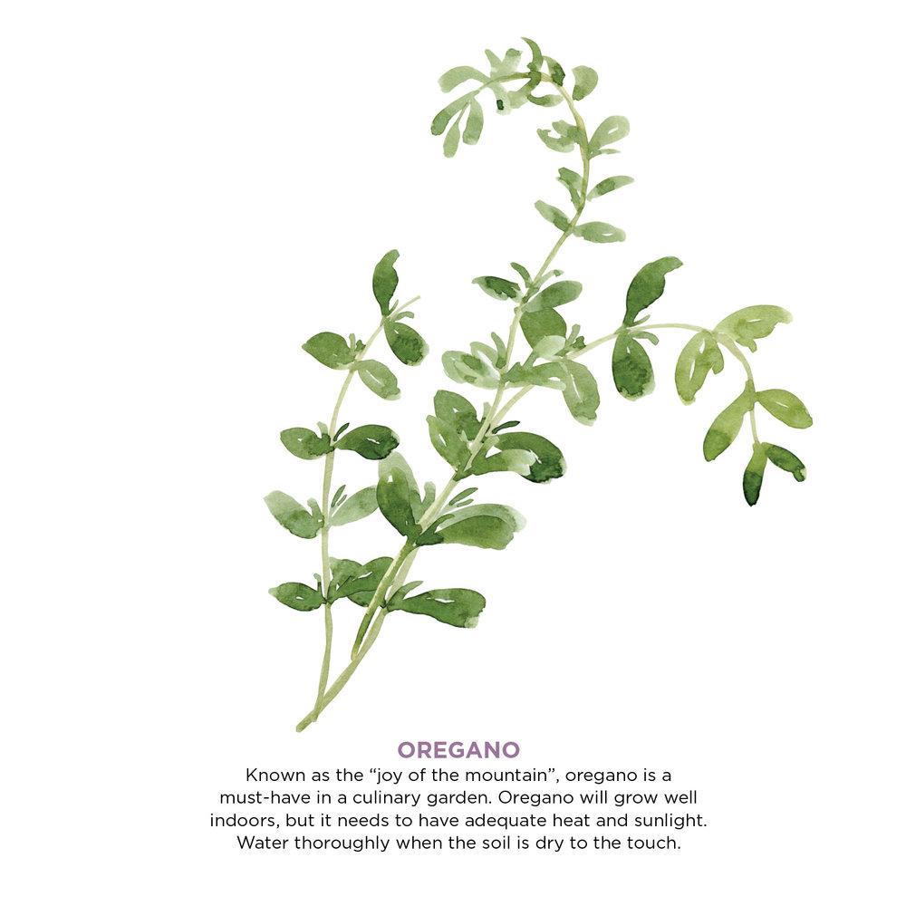 herbs9.jpg