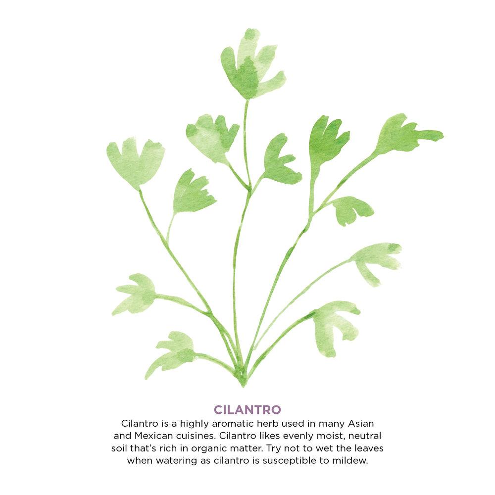 herbs10.jpg
