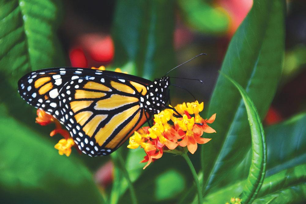 animal-beautiful-bloom-357189.jpg