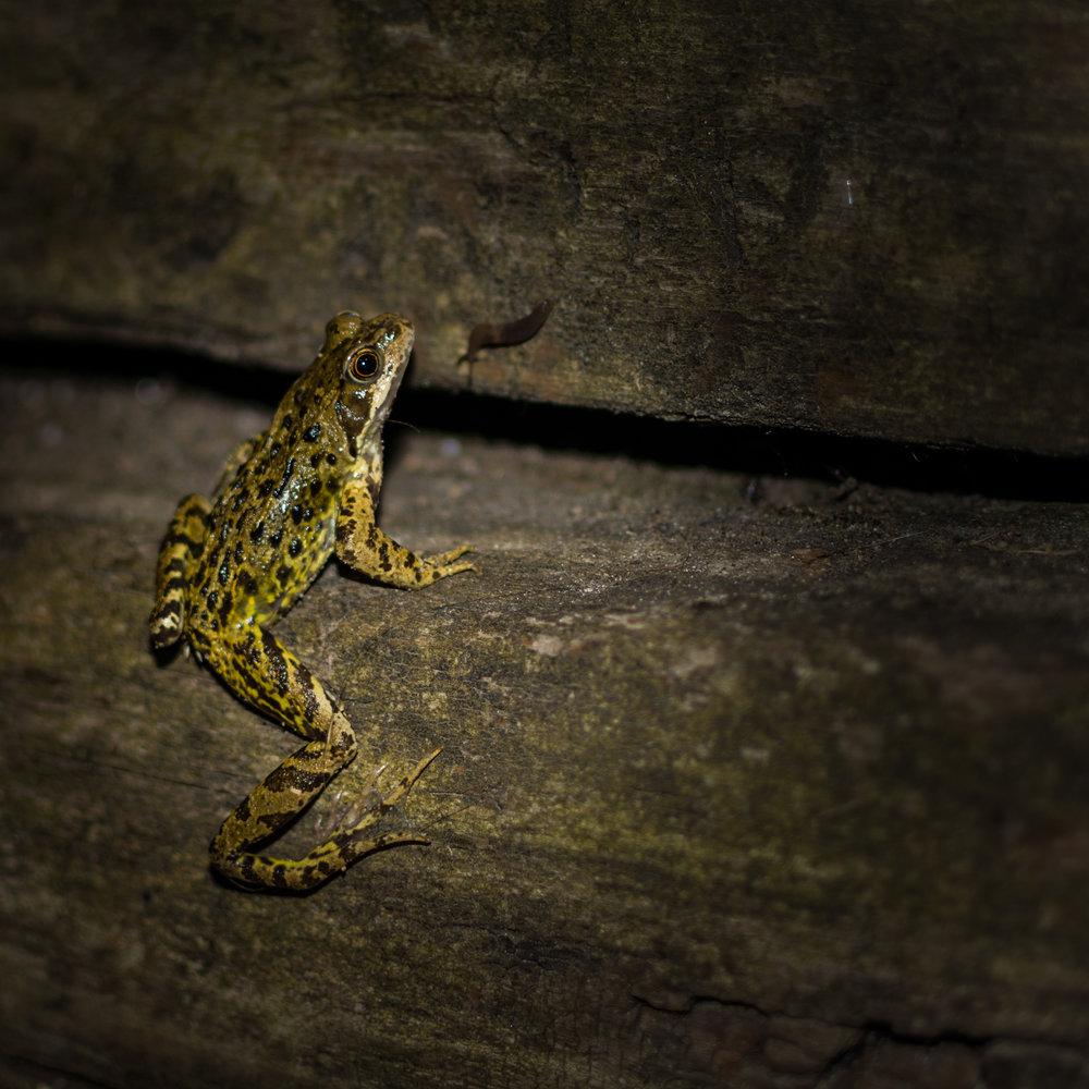 frog meets slug