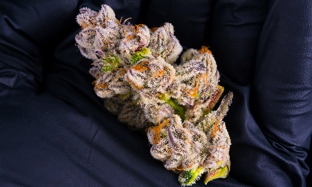 Purple-Punch-Nug-Hand.jpg