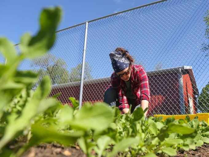 Jenny Quiner of Dogpatch Urban Gardens, Photo Credit Des Moines Register