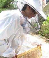 julia beekeeping 5 2 2014 (7)