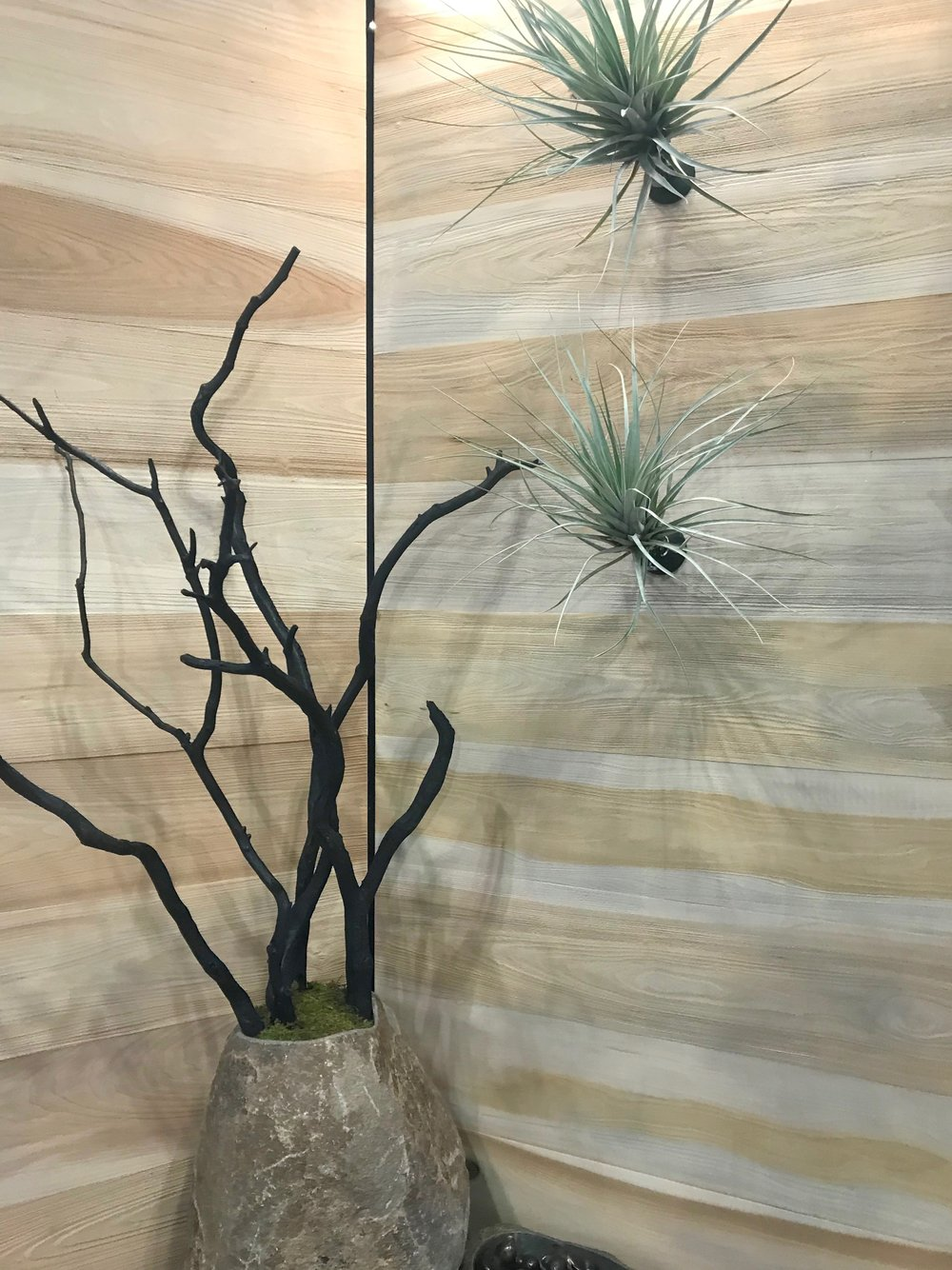Wall mounted Tillandsia and blackened Manzanita