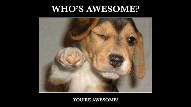 awesome-dog.jpg