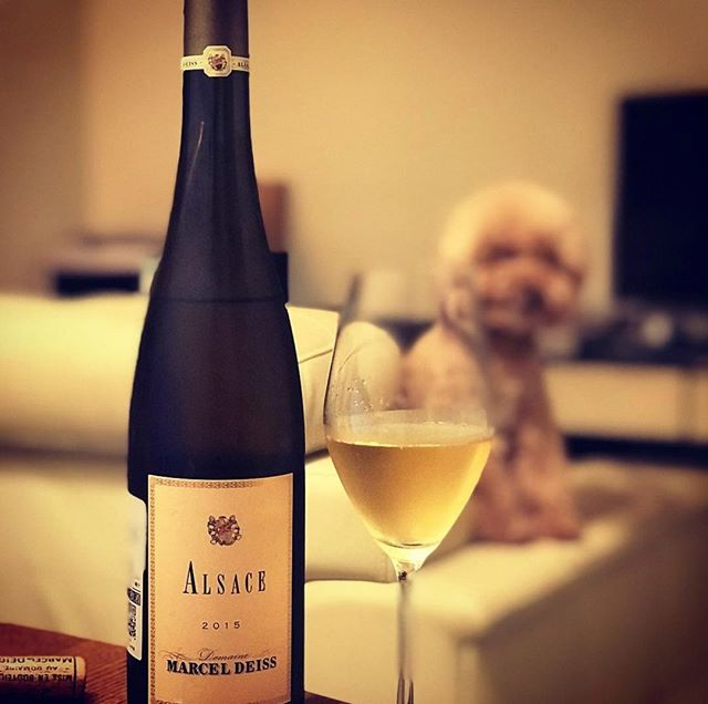 Name a more lovable duo than #Alsace wines and puppies - we'll wait. ⠀ -⠀ Happy #NationalPuppyDay to our furry friends!⠀ -⠀ -⠀ -⠀ -⠀ #DrinkAlsace #Alsace #WinesofAlsace #AlsatianWine #Frenchwine #France #NYC #puppy #dog #marceldeiss #whitewine #winelover #winelovers #doglover #doglovers #dogsofinstagram #winesofinstagram #newyork #like #reshare #repost #glassofwine #bottleofwine #winebottle #wineglass #whitewineexcellence #welovealsace #hypallergenic