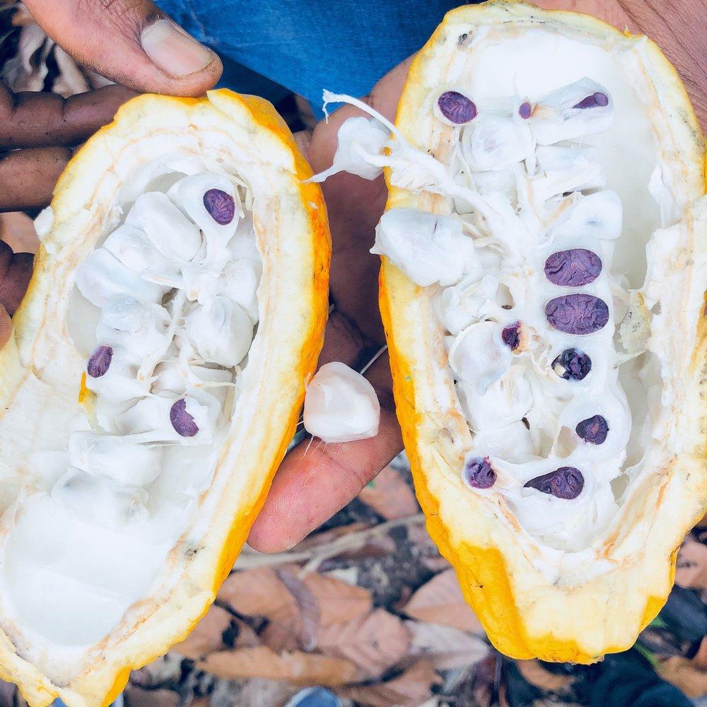 CacaoFlavanols