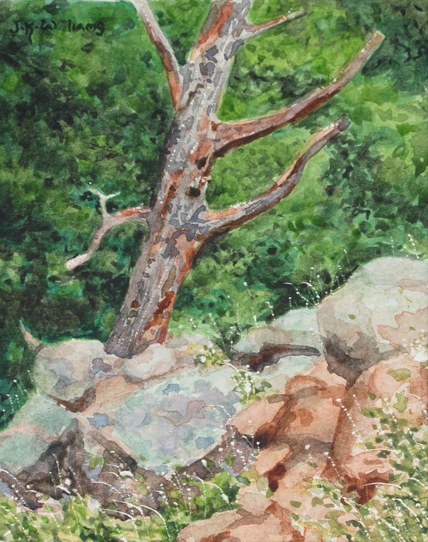 """Dead Tree""    Watercolor 4""x 5"""