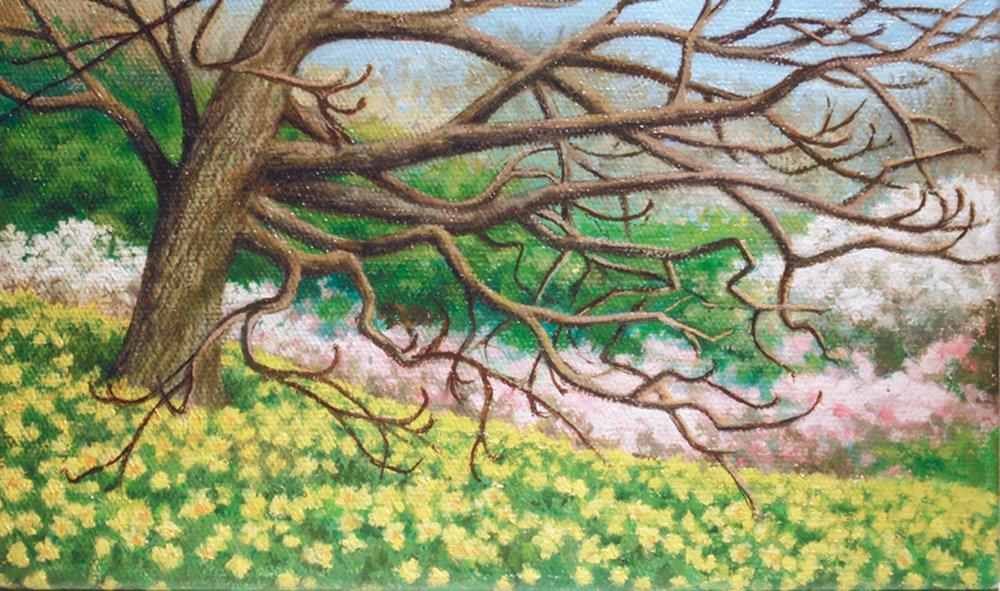 """""""Daffodil Hill""""    Oil 4 1/4"""" x 7 1/4"""""""