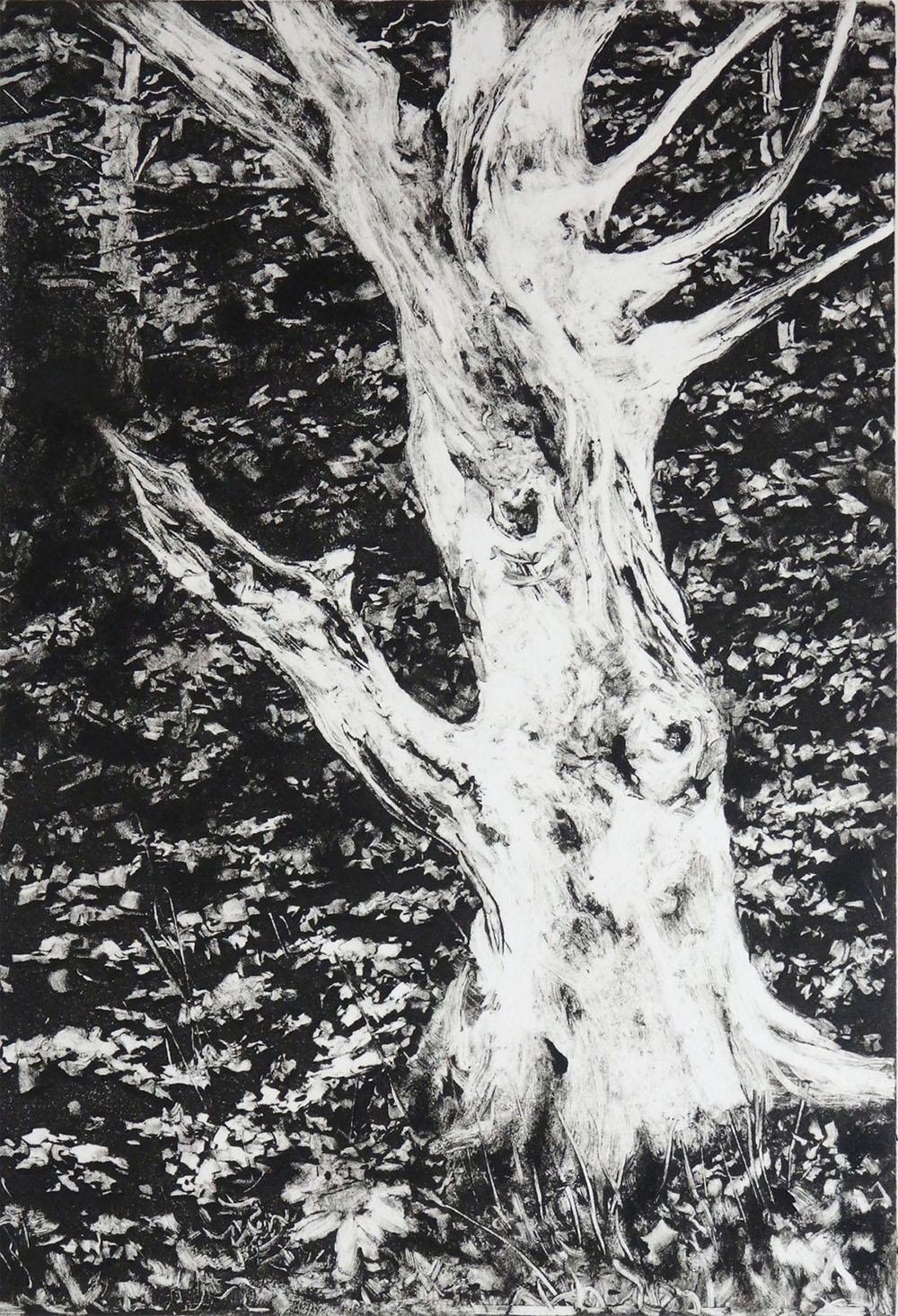 """The Old Tree""    Monotype 6 1/2"" x 4 1/2"""