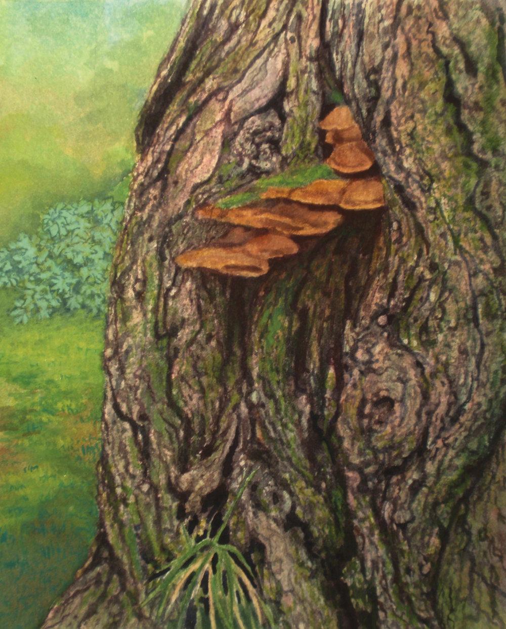 """Fungus, Central Park""  Watercolor 6 1/8""x 5"""