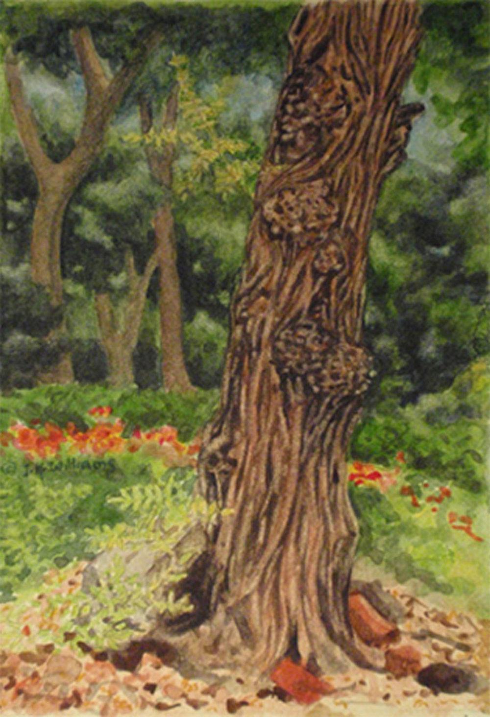 """Tree in Washington Square Park""    Watercolor 6 1/2"" x 4 1/2"""