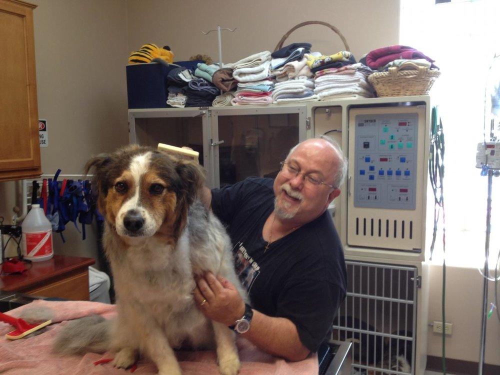 dog_grooming.jpg