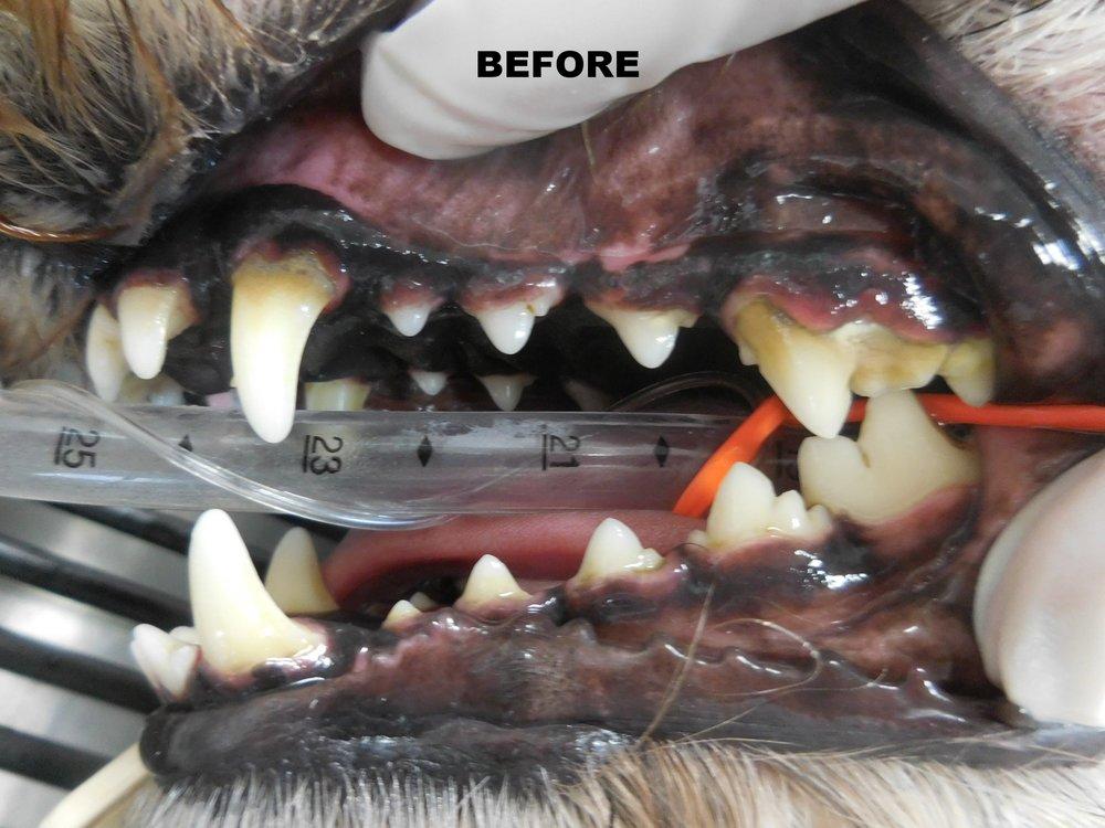 Denta Care 4.JPG