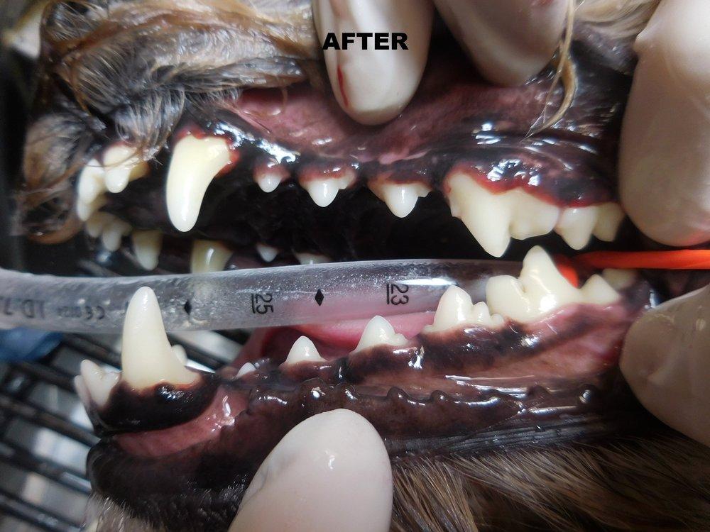 Denta Care 4A.JPG