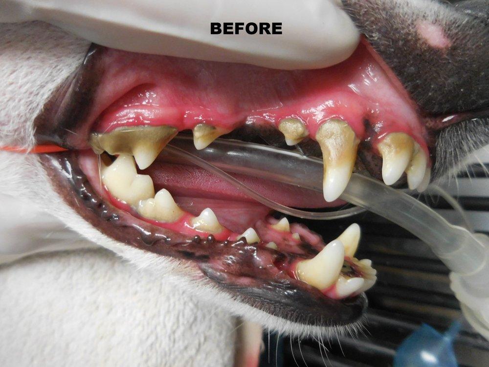Denta Care 2.JPG