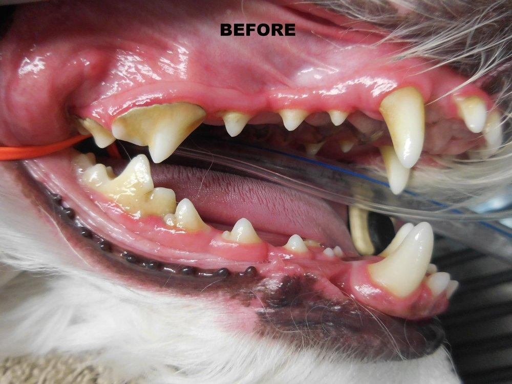 Denta Care 7.JPG