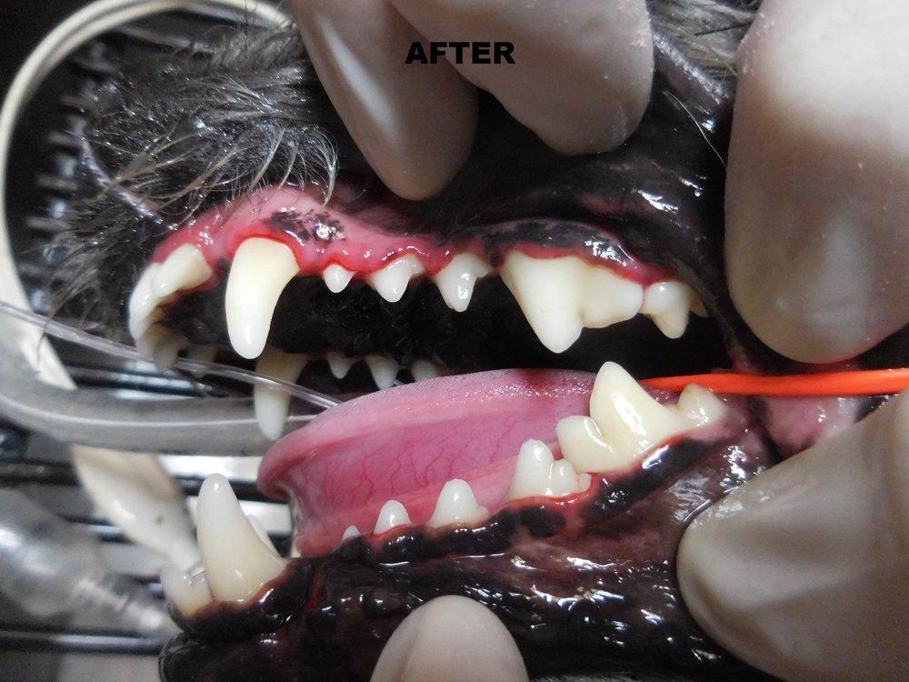Denta Care 6A.JPG