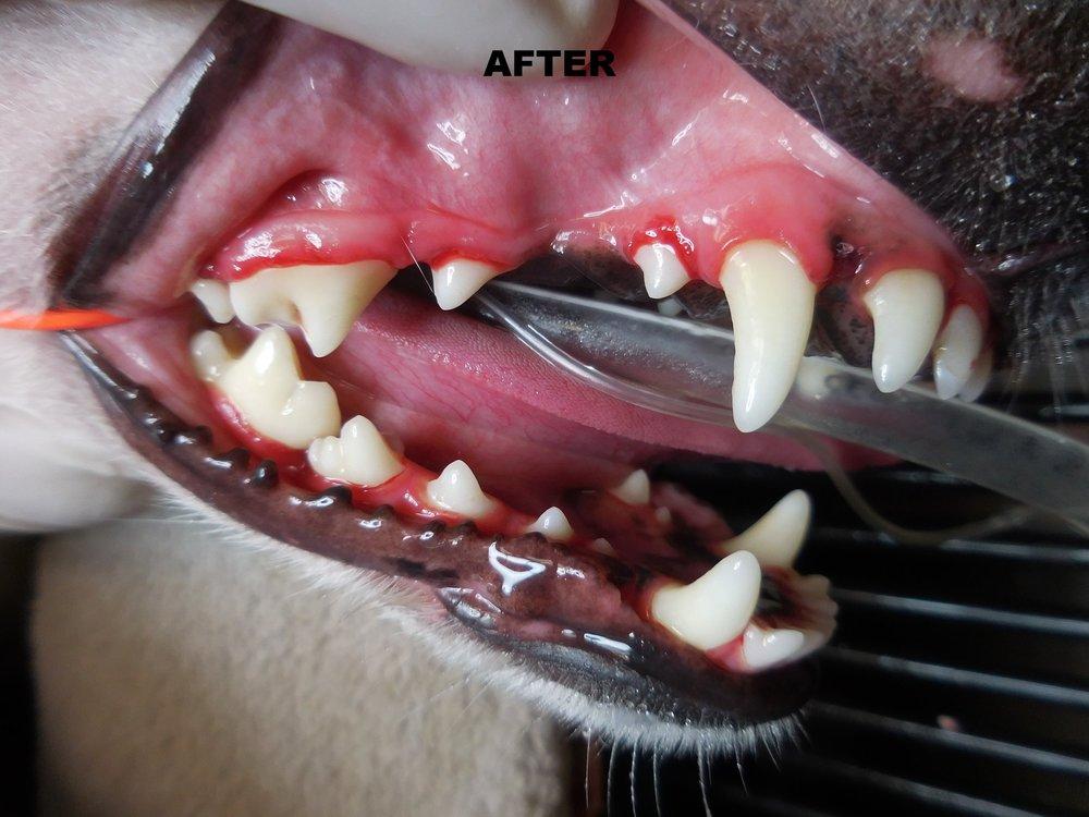 Denta Care 2A.JPG