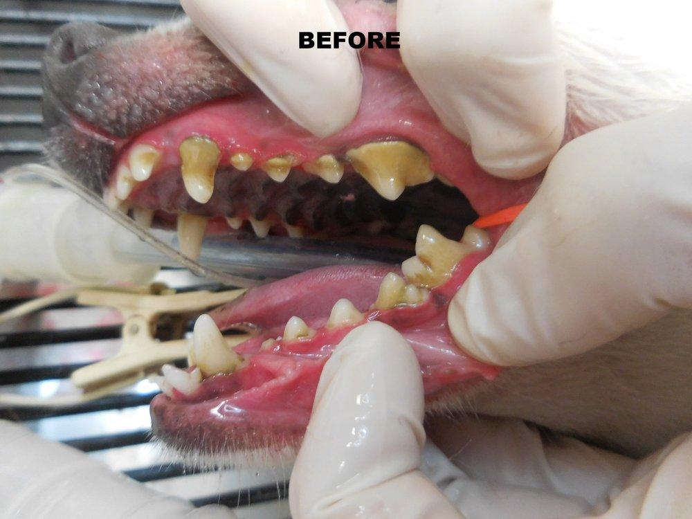 Denta Care 3.JPG