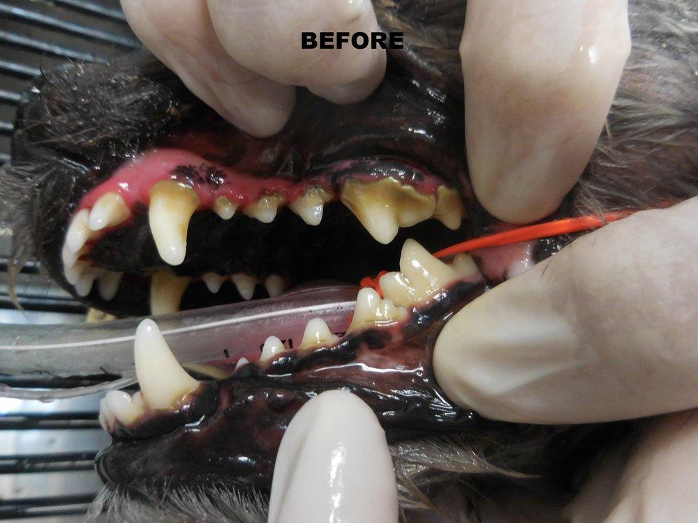 Denta Care 6.JPG