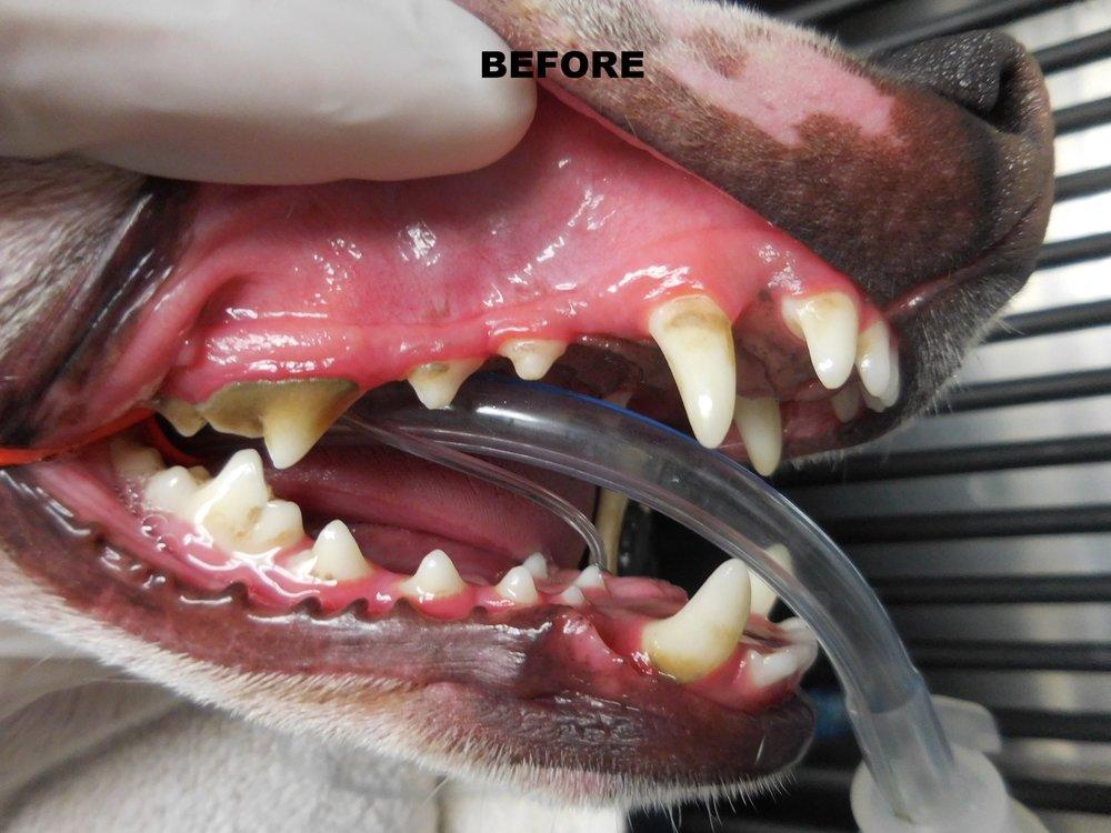 Denta Care 1.JPG